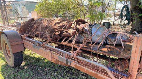 770-pound crocodile caught at Outback tourist destination