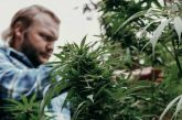 Virginia Becomes First Southern US State to Approve Legalisation of Marijuana