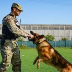 Shortage of US Working Military Dogs May Pose Security Risk, Pioneer Report Warns