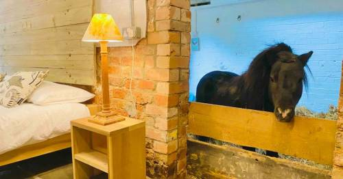 You can have a sleepover in an Airbnb with a miniature pony called Basil