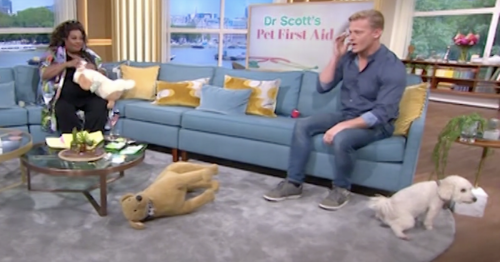 This Morning's Dr Scott mortified as pet dog Skully urinates on carpet live on air