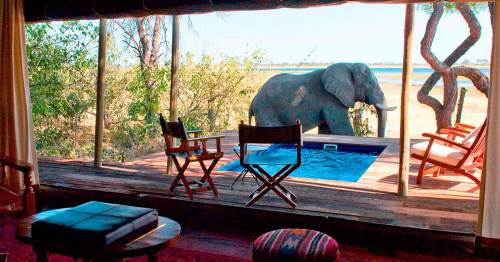 Inside the luxury safari camp where guests can watch elephants from rooms with pools