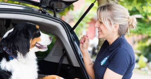 Savvy dog lover sets up taxi service for pets and acts as puppy chauffeur