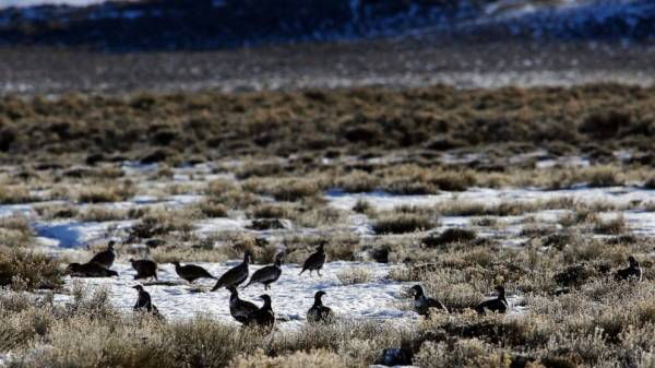Judge blocks drilling plans in 2 states, citing bird habitat