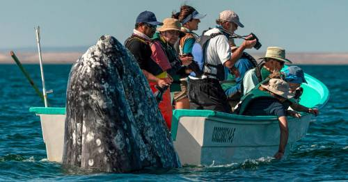 Giant whale 'slowly and silently' sneaks up on boatload of camera-toting tourists