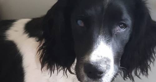 Dog is forced to have its eye removed after freak accident in the garden