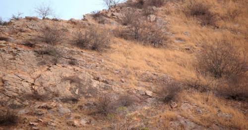 Leopard was so perfectly hidden in hills photographer couldn't see it in photo at first – World News