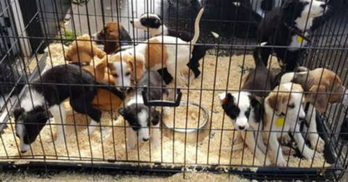 Man crams 44 dogs into tiny cages to drive down motorway – before 20 of them die