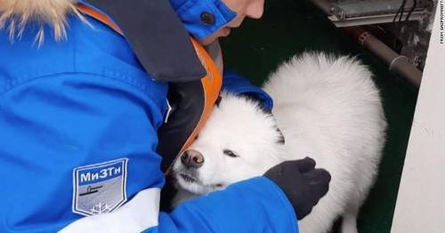 Lost dog is rescued by ship crew after walking through Arctic ice for a week – World News