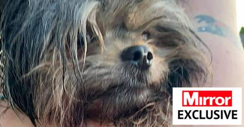 Mum demands law change on dog-on-dog attacks as tiny pet fatally mauled by mastiffs