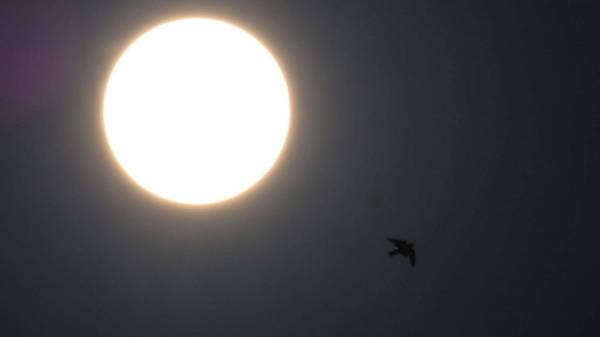 Watch: Solar eclipse visible in US for 1st time since 2017