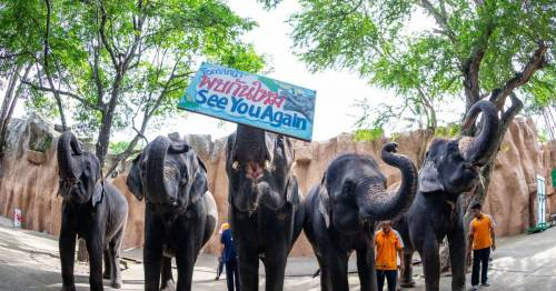 Struggling zoo selling off 11 elephants as visitor numbers plummet due to Covid – World News