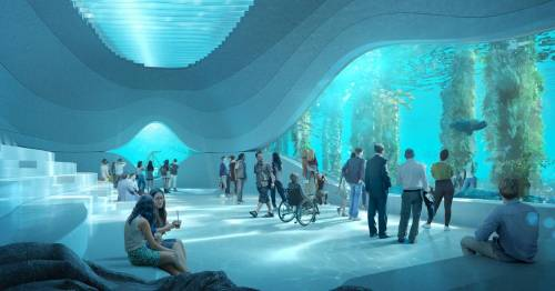 Incredible underwater observatory for whale-watching set to open in 2022