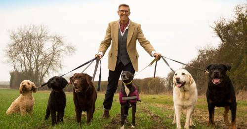 'Dogfather' Graeme Hall shares top tip for training aggressive dogs after lockdown