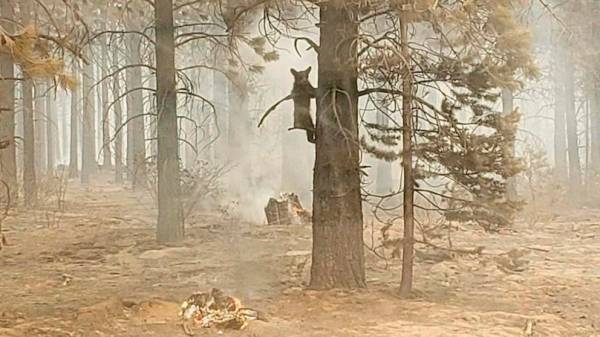 Bootleg Fire now 3rd largest wildfire in Oregon state history