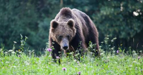 Tokyo 2020 Olympics officials on red alert after bear sneaks into softball stadium