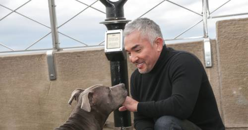Dog Whisperer Cesar Millan pays tribute to beloved 'right hand' dog after death
