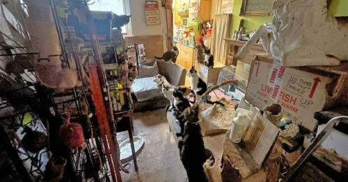 Inside small terraced home where man lives with 70 cats with neighbours 'scared'