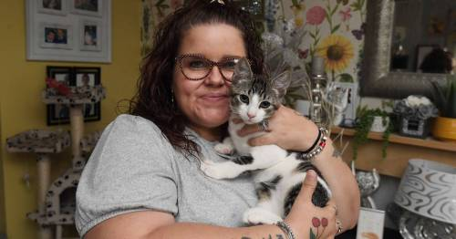 Mum who owns 11 cats heartbroken as she's told to rehome pets or face £1,500 fine