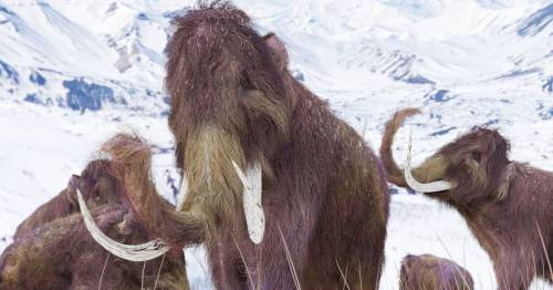 Woolly mammoths could be brought back from extinction to fight climate change – World News