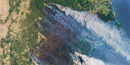 Wildfires in Australia caused an explosion of sea life thousands of miles away