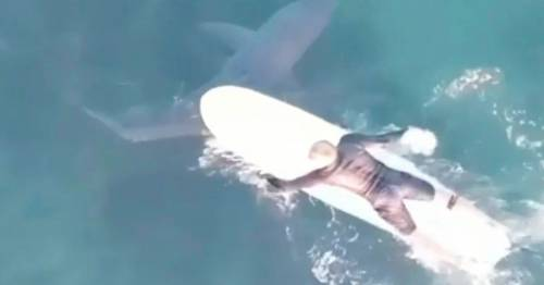 Great white shark spotted just feet away from surfers in stunning drone footage