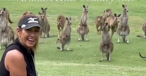 Gang of kangaroos invade course as golfer Wendy Powick tries to tee off
