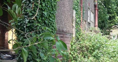 Abandoned home left to nature for over a decade is up for auction at bargain price
